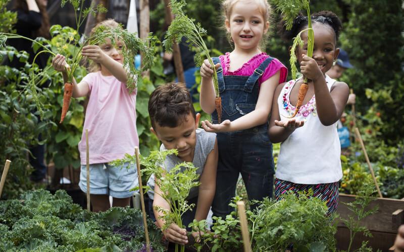 4 children in a school garden showing off carrots
